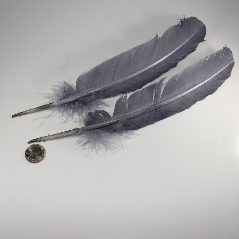 Single Grey Feather