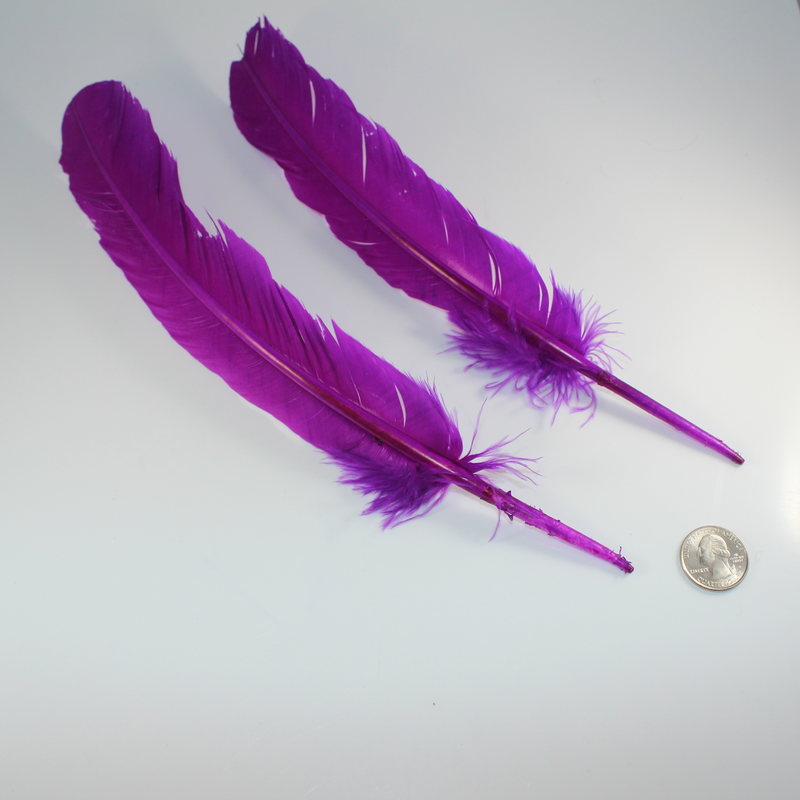 Single Purple Feather