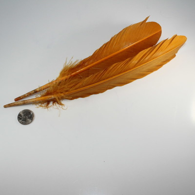 Single Orange Feather